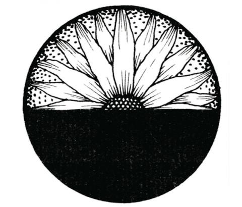 Sunflower drawn by Lee Chapman